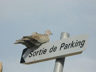 Tauben auf Schild - Taube, Schild, parking
