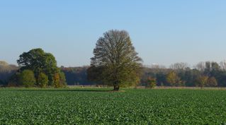 Herbstlandschaft - Herbst, Bäume, Natur, Ruhe, Ernte, Acker, Rinde Blätter, Herbst, Laub, Laubfall, Herbstlaub, herbstlich, Jahreszeiten, Vergänglichkeit, Schreibanlass, Meditation