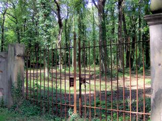 Rostiges Tor im Wald - Wald, Bäume, Tor, Eisentor, Gitter, offen, Durchgang, Eingang, Natur, verfallen, verwildert, Licht, Schatten, Sonne, Schreibanlass, Fantasie, Schloss, Rost