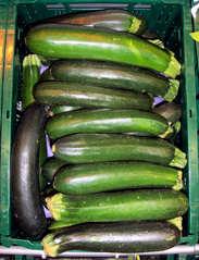 Zucchini - Zucchini, Kürbisgewächs, Kürbis, Gemüse, grün