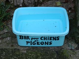 Bar pour chien et pigeons - Humor, bar eau, Wasser, Napf, chiens, Hunde, pigeons, Tauben, blau