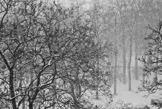 Wettererscheinung Schnee - Wetter, Schnee, schneit, schneien, Niederschlag, kalt, Winter, winterlich, windig, Schneefall, Schneegestöber, Weihnachten, Advent