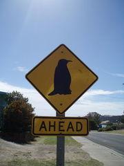 Australisches Straßenschild - Pinguin - Straßenschild, Australien, Pinguin, Viereck, Rechteck, Quadrat, Schild