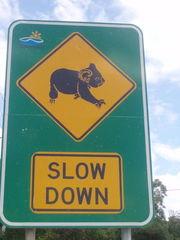 Australisches Straßenschild - Australien, Koala, Straßenschild, Straßenverkehr, Naturschutz, Australische Tiere, quadrat, Rechteck, Viereck