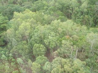 Tropischer Regenwald - Tropen, Regenwald, Tropischer Regenwald, Tropical Rainforest, Australien