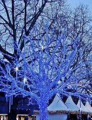Weihnachtsdekoration auf dem Markt - Advent, Licht, Dekoration, kalt, Baum, eisblau, Eis