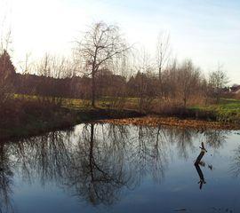 Abendstimmung  - Abendstimmung, Spiegelung, Teich, Bäume, Meditation, Beschreibung