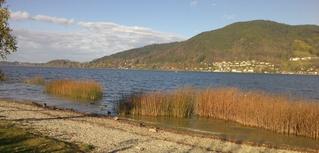Herbststimmung am Tegernsee - See, Berg, Tegernsee, Wasser, Schilf, Berge, Wald, Enten, Weg, Schotter, Herbst, Wolken, Stimmung, Wetter, Jahreszeiten