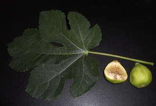 Feige - Blatt und Frucht - Ernährung, Obst, Feigen, Feige, Blatt, Frucht, Maulbeergewächs, Bedecktsamer, Samenkörner, Samen, süß, Nahrung, Querschnitt