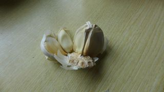 Knoblauch - Knoblauch, Gewürzpflanze, Heilpflanze, Knobi, Arzneipflanze, krautig, Zwiebelgeächs, Knoblauchzehe