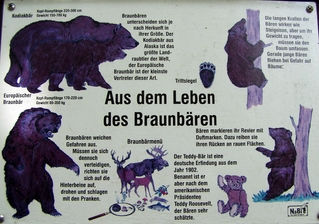 Hinweistafel zum Bären - Bär, Bären, Wildtier, Tier, Erklärung, Hinweis, Information, Tafel, Informationstafel, Raubtier, Artenschutz, Schutz