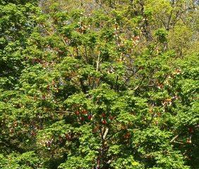 Ostereierbaum#1 - Ostern, Brauchtum, Sehenswürdigkeiten, Osterschmuck, Tradition