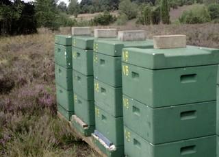Bienenkästen #1 - Bienen, Bienenstock, Beute, Bienenkasten, Schwarm, Imkerei, Bienenvolk, Wanderimker, Wald, Imker, Honigbiene, Honig, sammeln, Frühlingsblüten, Blütenhonig