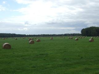 Heuwiese - Wiese, Heu, Heuballen, Gras, Weite