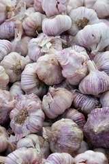 Knoblauch - Knoblauch, Nahrung, Kochen, Allium sativum, Knobi, Heilpflanze, Gewürzpflanze, Zwiebelgewächs