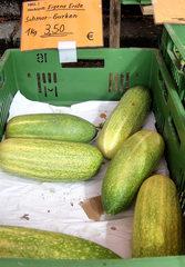Schmorgurke - Schmorgurke, Gurke, Gemüsegurke, Schälgurke, Kürbisgewächs, Feldgurke