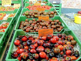 Tomaten #3 - Tomate, Tomaten, Nachtschattengewächs, Vielfalt, Varianten, Sorten