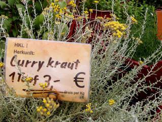 Kräuter #14  Currykraut - Currykraut, Immortelle, Strohblume, Korbblütler, Gewürz, Gewürzpflanze