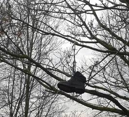 Schuh im Baum  #1 - Schuh, Baum, kurios, Erzählanlass, Schreibanlass