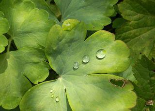 Tropfen auf Grün - Wasser, Tropfen, Regentropfen, Wassertropfen, Regen, Niederschlag, Adhäsion, Kohäsion, Physik, benetzend, flüssig, kugelförmig, Flüssigkeit, spritzer, spritzen, drop, nass, tropfnass, grün, Blatt, Meditation, Impuls, Impression, Oberflächenspannung