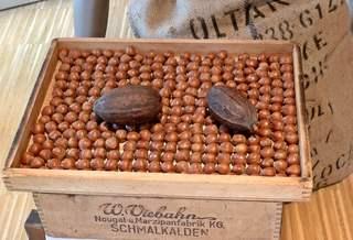 Haselnuss und Kakaobohne - Pflanzen, Biologie, Asien, Kakao, Kakaobohne, Schokolade, Frucht, Zutaten, Nuss, Nüsse, Haselnuss, Nougat, Genussmittel, Kakaoerzeugnis, exotisch