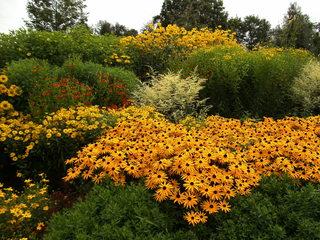Staudenbeet#5 - Sommer, Blume, Blumen, Sommerblumen, Kunst, Farbenlehre, Gartenanlage, Beet, Blumenbeet