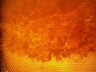 Bienenwabe #4 - Biene, Bienenstock, Honig, Wabengebilde, Zellen, Bienenhaltung, Wabe, Bienenwabe, Imkerei