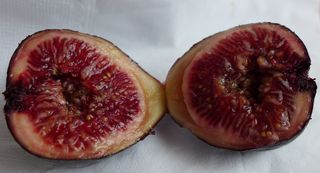 Feige #2 - Ernährung, Obst, Feigen, Feige, Blatt, Frucht, Maulbeergewächs, Bedecktsamer, Samenkörner, Samen, süß, Nahrung