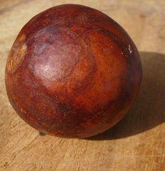 Avocadokern - Avocado, Avocadokern, Ölpflanze