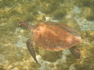 Wasserschildkröte - Reptilien, Reptil, Schildkröte, Wasser, Kriechtier, Panzer, Tiere, Keratin, bedroht, Schildpatt, Artenschutz, Terrarium, Ufer, Wasser, schwimmen