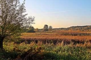 Herbstlandschaft - Herbst, Bäume, Natur, Ruhe, Ernte, Blätter, Herbst, Laub, Laubfall, Herbstlaub, herbstlich, Jahreszeiten, Vergänglichkeit, Schreibanlass, Meditation, bunt, Impression, Landschaft, ländlich, Land, Naturschutz