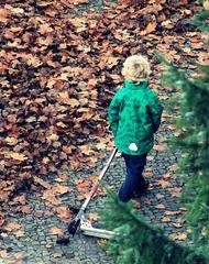 Herbstspaziergang - herbstlich, spazieren, Kind, Herbst, bunt, Freizeit, spielen, beenden, Ende, Blätter, Laub, Blatt, Weg, gehen, ziehen, Spaziergang, Mensch, allein, Roller, grün, Spielzeug, Spielgerät