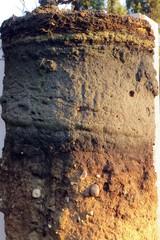 Profil des Heidebodens #2 - Bodenprofil, Podsol, Ortstein, Humus, Sand, Schotter, Eisenoxid, Oberboden, Unterboden, Auswaschung, Mineralien, Bodenversauerung, Bleicherde, Sander