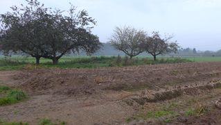 Herbstimpressionen - Ernte, Spargelfeld, Herbst, Herbstimpressionen, ernten, Feld, Landwirtschaft