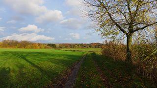 Herbstlandschaft #2 - Herbst, Bäume, Natur, Ruhe, Ernte, Acker, Blätter, Herbst, Laub, Laubfall, Herbstlaub, herbstlich, Jahreszeiten, Vergänglichkeit, Schreibanlass, Meditation, Weg