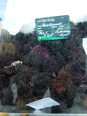 Oursins - Seeigel - Frankreich, Seeigel, oursin, Stachelhäuter, Markt