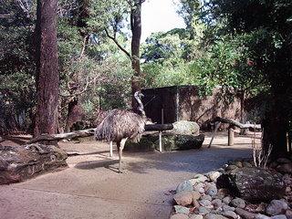 Emu - Australien, Tiere, Vogel, Zoo, Laufvogel, Fleisch, Nutztier, Symbol