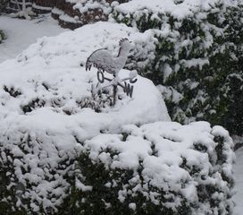 Wetterhahn - Wetterhahn, Winter, Schnee, kalt, eisig