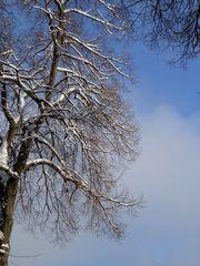 typisch Winter 1# - Winter, Frost, Eis, Wasser, Schnee, frieren, gefroren, zugefroren, Dichte, Physik, Aggregatzustand, Anomalie, Eindruck, kalt, Impression, Jahreszeit, Licht, Schatten, kalt, Kälte, winterlich, frostig, Wolken, Ast, Zweige