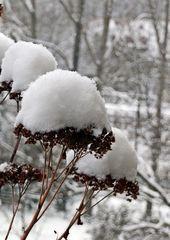 typisch Winter 6# - Winter, Frost, Eis, Wasser, Schnee, frieren, gefroren, zugefroren, Dichte, Physik, Aggregatzustand, Anomalie, Eindruck, kalt, Impression, Jahreszeit, Licht, Schatten, kalt, Kälte, winterlich, frostig, Planzenteil, Fruchtstand, Schneehut, Hut