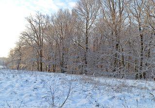 typisch Winter 3# - Winter, Frost, Eis, Wasser, Schnee, frieren, gefroren, zugefroren, Dichte, Physik, Aggregatzustand, Anomalie, Eindruck, kalt, Impression, Jahreszeit, Wald, Baum, Bäume, Licht, Schatten, kalt, Kälte, winterlich, frostig