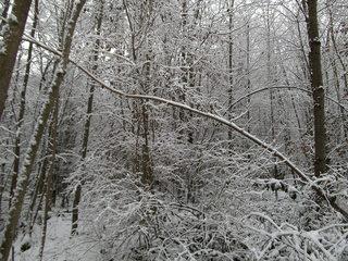 Schnee im Wald#3 - Baum, kahle Bäume, kahl, unbelaubt, Winter, Landschaft, Winterlandschaft, Schneelandschaft, Schnee, Schneedecke, verschneit, Kälte, Einsamkeit, Ruhe, Stille, Schreibanlass, Meditation