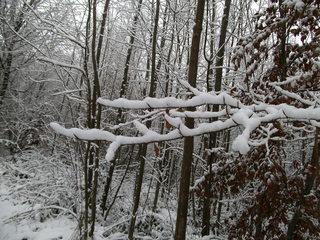 Schnee im Wald#4 - Baum, kahle Bäume, kahl, unbelaubt, Winter, Landschaft, Winterlandschaft, Schneelandschaft, Schnee, Schneedecke, verschneit, Kälte, Einsamkeit, Ruhe, Stille, Schreibanlass, Meditation