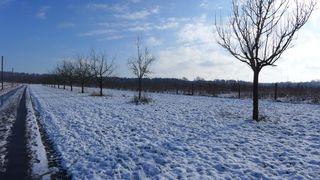 Landschaft im Schnee #1 - Winterlandschaft, Winter, Schnee, kahle Bäume, Sonne, Schneelandschaft, Kälte, Einsamkeit, Ruhe, Stille, Schreibanlass, Meditation, Fluchtpunkt, Perspektive