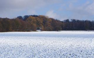 Landschaft im Schnee #3 - Winterlandschaft, Winter, Schnee, kahle Bäume, Sonne, Schneelandschaft, Kälte, Einsamkeit, Ruhe, Stille, Schreibanlass, Meditation, Fluchtpunkt, Perspektive