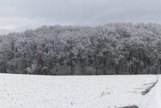Winterwald - Schnee, Winter, Schneelandschaft, Schneefeld, verschneit, Stille, Wetter