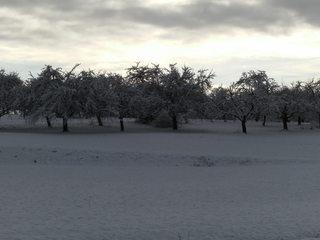 Winterstimmung - Winterlandschaft, Winter, Schnee, kahle Bäume, Schneelandschaft, Kälte, Einsamkeit, Ruhe, Stille, Schreibanlass, Meditation, Obstbäume, Trüb, wolkig