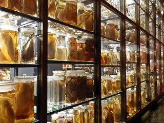 Regal mit Präparaten#3 - Regal, Aufbewahrung, Präparat, Natur, Konserve, Konservierung, wissenschaftlich, Sammlung, archivieren, Archivierung, ordnen, Ordnung, sortieren, Nasssammlung, Naturkunde, naturkundlich, Archiv, aufbewahren, Dokumentation