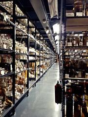 Regalgang mit Präparaten#2 - Regal, Aufbewahrung, Präparat, Natur, Konserve, Konservierung, wissenschaftlich, Sammlung, archivieren, Archivierung, ordnen, Ordnung, sortieren, Nasssammlung, Naturkunde, naturkundlich, Archiv, aufbewahren, Dokumentation
