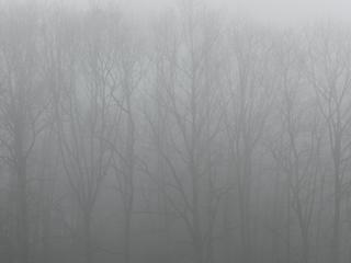 Nebelwald - Nebel, Niederschläge, Wald, Natur, Luft, Luftfeuchtigkeit, Dunst, Wolke, Tau, Niederschlag, Sicht, Sichtbehinderung, Wasser, diesig, trüb, neblig, Wetter, Wetterphänomen